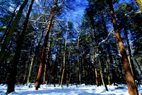 CathedralStateParkWinter-sjs-08